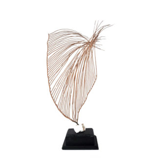 Corail Gorgone Lyre